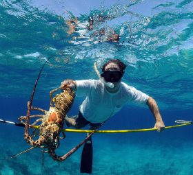 Important Services That a Maui Scuba Diving Company Should Offer