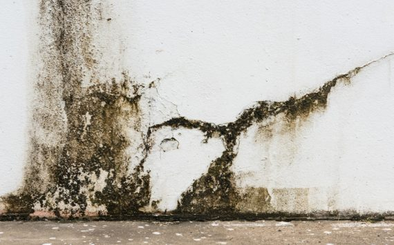 2 Benefits Of Hiring A Professional Restoration Company In Arizona To Restore Your Home From Water Damage
