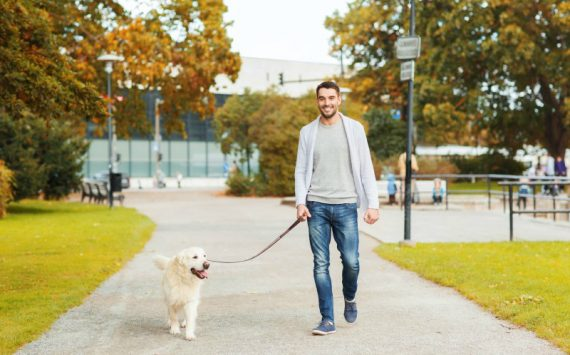 Reasons Why People Should Hire Professional Dog Walking in NYC